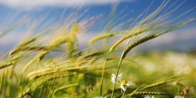 Привороты на ветер позволят вселить любовь в сердце